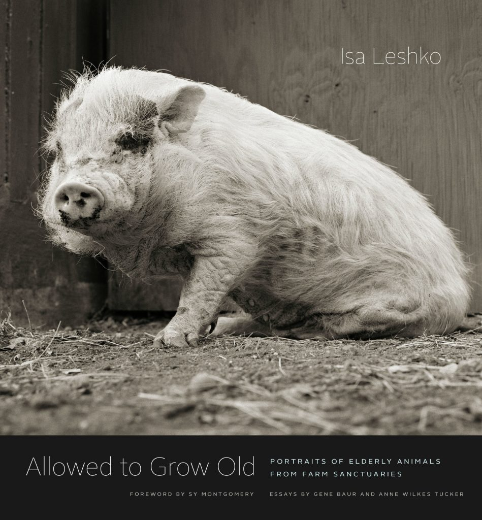 Allowed to Grow Old è diventato ora anche un prezioso libro fotografico pubblicato da University of Chicago Press.
